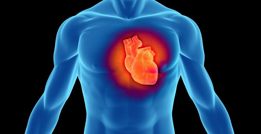Ниацин се препоръчва за приемане при недостиг на адреналин в кръвта, поради което действието му е важно за регулирането  на сексуалния тонус на човека