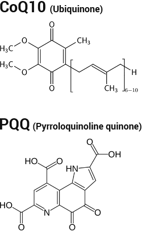 За да се запази оптималното количество митохондрии и да се увеличи броят им, може да използвате хранителната добавка Best PQQ, съдържаща пиролохинолин хинон (PQQ).