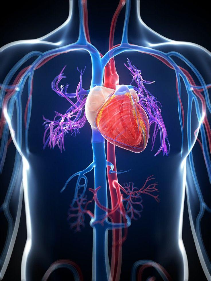Serrapeptase от Doctor's Best поддържа сърцето и съдовете здрави и чисти