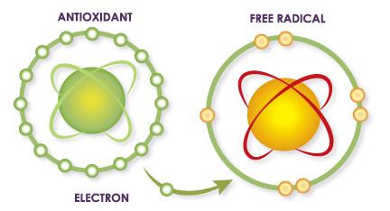 NAC Detox Regulators е продукт с отлични качество и топ цена в Protein.bg