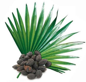 Продуктът Saw Palmetto Standardized Extract 320 мг на чудесна цена от Doctor`s Best е екстракт от палмата дужудже Serenoa repens, гарантирано съдържащ 85-95% мастни киселини, както и някои полезни растителни стероли, които са основните активни съставки на билката.