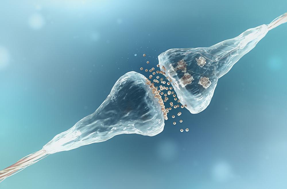 Dymatize GABA стимулира предаването на нервни сигнали в цялото тяло