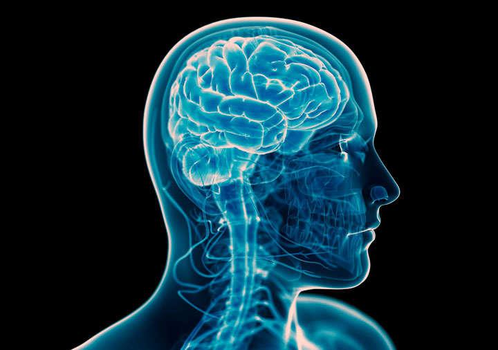 Acetyl L-Carnitine на фирма Prozis подобрява мозъчната функция.