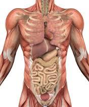 Prozis Foods Vitamin A 25000 IU подпомага растежа на мускулите и здравето на храносмилателната система