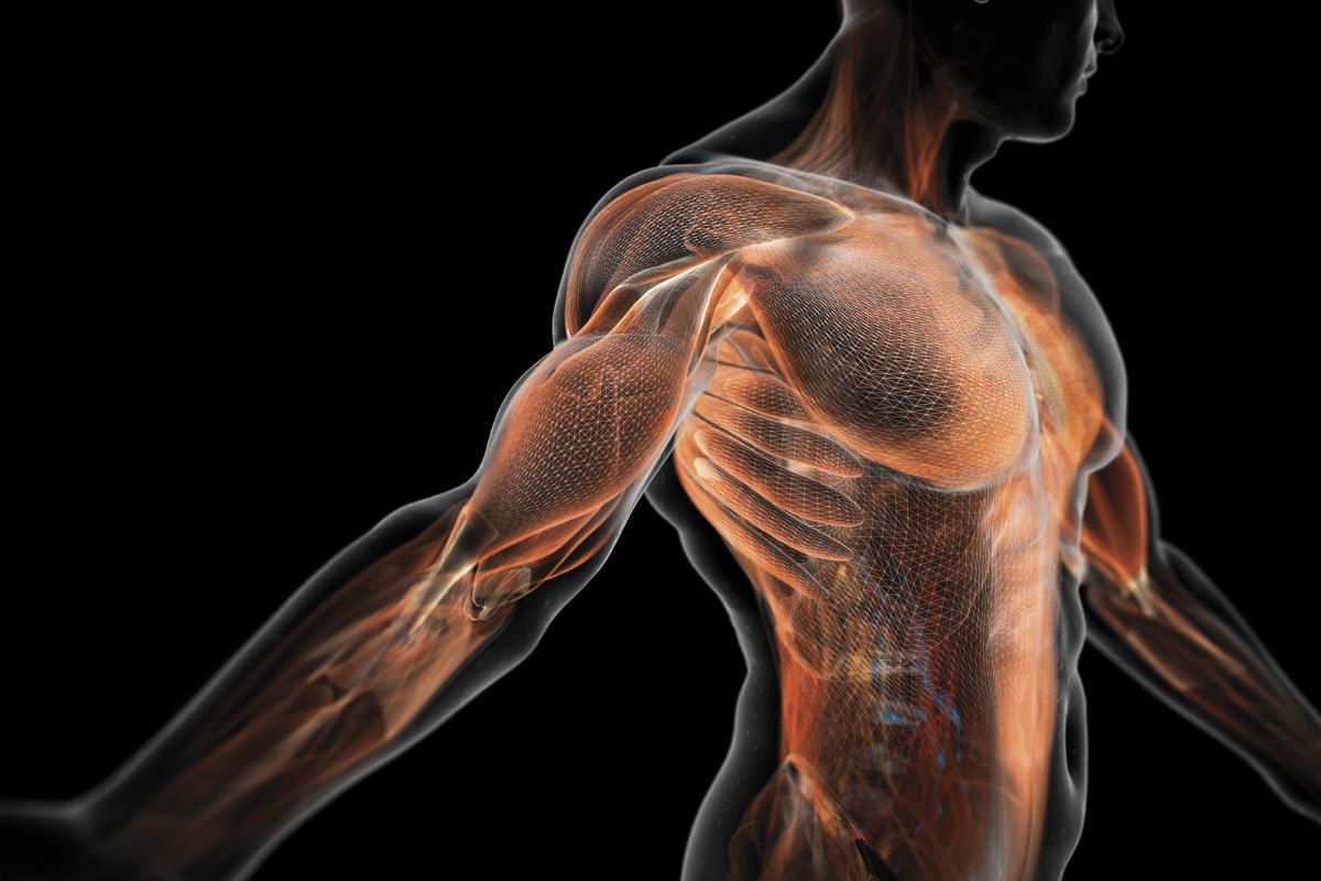 Universal Nutrition Gain Fast 3100 дава анаболитен ефект без трупане на мазнини