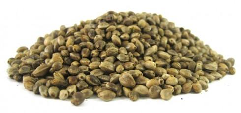 Zoya Конопен протеин се произвежда от пресовани конопени семена